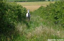 Expedienten dos veïns d'Algerri per tenir cavalls en mal estat