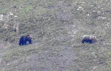 Avistan dos osos en Bagergue, cerca de la finca afectada por los ataques