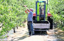 La crecida del río Cinca inunda 30 fincas en La Granja y los frutales empiezan a pudrirse