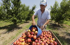 Frente mediterráneo por el régimen de la fruta en la UE