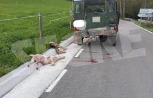 Protectores critiquen que la mort de dos gossos a Sarroca no arribi a judici