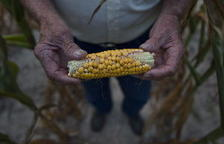 Los precios agrícolas seguirán bajos en la próxima década, según la OCDE y la FAO