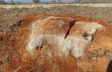 Estudian denunciar al Canal d'Urgell por la tala de árboles en Agramunt