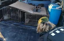Denuncian a dos cazadores por introducir conejos sin permiso en un coto de Torà