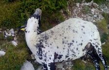 Denuncian más de 50 ovejas muertas por el lobo en Odèn
