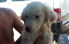 Rescatan cinco cachorros abandonados en un tubo de riego