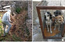 L'ajuntament busca famílies d'acollida per als gossos.