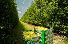Nufri vendrà un 10% de fruita a través de la marca Livinda, amb els estàndards més alts de qualitat.