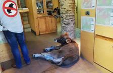 L'acció de protesta ha tingut lloc a l'oficina del Parc Natural de l'Alt Pirineu a Llavorsí.