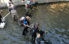 Rescatadas 3.760 truchas en el canal de Sossís