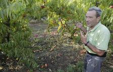 Un agricultor revisant dimarts una finca després de la tempesta de pedra.