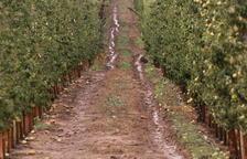 Una nueva tormenta de granizo y agua descarga en fincas frutícolas de Sunyer