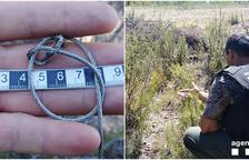 Identificat dos vegades en 4 mesos per caça il·legal a les Garrigues