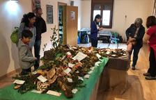 L'exposició dels bolets que van trobar els cinquanta veïns que van participar en l'excursió.