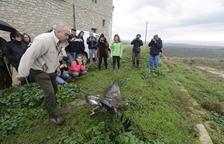 Liberan una águila dorada en la reserva de Mas de Melons