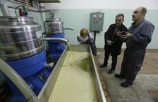 Belianes i Castelldans es bolquen en les seues fires de l'oli amb 11.000 quilos venuts