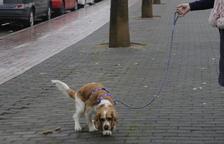 Un perro justo después de defecar, ayer en la avenida del Segre.