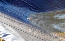 Mueren 3 perros de caza atrapados en una balsa de riego en Castelldans
