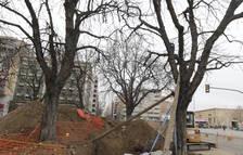 El trasplantament dels dos arbres davant l'estació, a punt