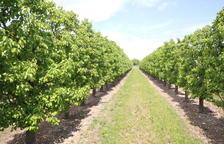 Los payeses deberán pagar 50 euros por hectárea y año para promocionar la fruta