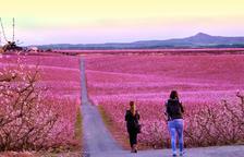 Aitona espera la visita de más de 18.000 personas a los campos de frutales floridos el mes próximo