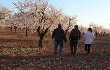 Les Garrigues estrena la campanya de les rutes turístiques pels camps d'ametllers en flor