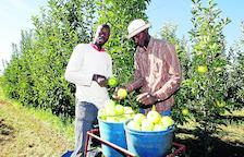 Lleida, líder de producció, importa una poma per cada dos que exporta