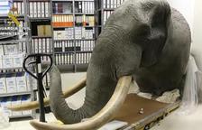 Desarticulada una xarxa de comerç il·legal d'animals dissecats d'especial protecció