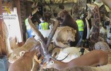 Recuperen a Lleida vint exemplars d'una xarxa il·legal d'animals dissecats