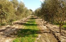 El Segrià Sud inicia l'ampliació del reg aquest any amb 350 hectàrees