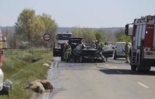 Mueren 30 ovejas al colisionar con dos coches en Puigverd de Lleida
