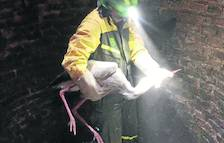 Rescatan dos cigüeñas atrapadas en Juneda