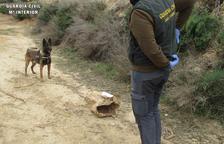Investigado por causar la muerte de 2 perros con veneno en Fraga