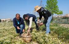 Premio internacional para L'Elixir, el nuevo licor de manzanilla de Linyola