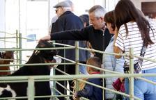 La Fira de Sant Isidre de Solsona abre hoy sus puertas con 200 expositores