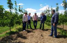 Ribes culpa el Govern de danys de senglars a l'Horta
