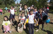 Més de seixanta escolars d'Agramunt planten xiprers