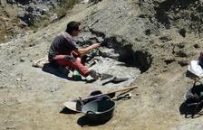Un grup de paleontòlegs ha trobat a Isona el jaciment més modern d'aquests rèptils, de fa 66 milions d'anys