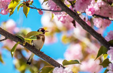 Adéu primavera, hola estiu!