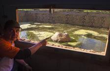 Vallbona habilita una balsa para observar anfibios y reptiles