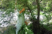 Retiran una planta tóxica originaria de Asia del cauce del Segre en el Alt Urgell