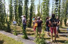 Visita a la plantación experimental durante la jornada celebrada en Olius.