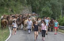 VÍDEO. Transhumància de cavalls al Jussà fins a la Vall Fosca