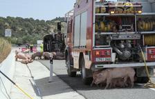 Tallat més de set hores l'Eix Transversal a les Oluges al bolcar un camió de porcs