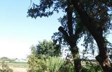 Un veí d'Alguaire denuncia tales de branques