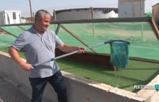 VÍDEO. Cultius de llenties d'aigua per frenar l'excedència de purins a Vila-sana