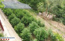 Detenidos en Balaguer y Artesa por cultivar 'maría'