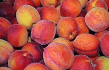 Capítol 8 - Fruita de pinyol