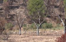 Indignació creixent a Maials per la falta d'ajudes després de l'incendi