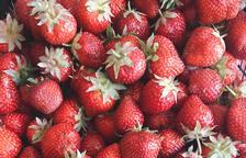 Capitol 11 - Fruites Vermelles